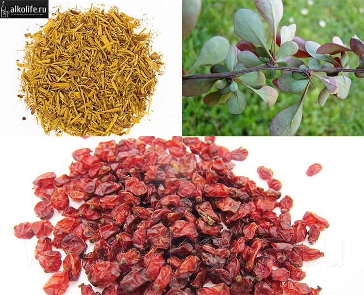 Листья корень и ягоды барбариса для настойки