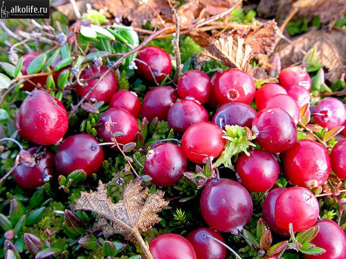 Спелые ягоды клюквы для настойки с коньяком