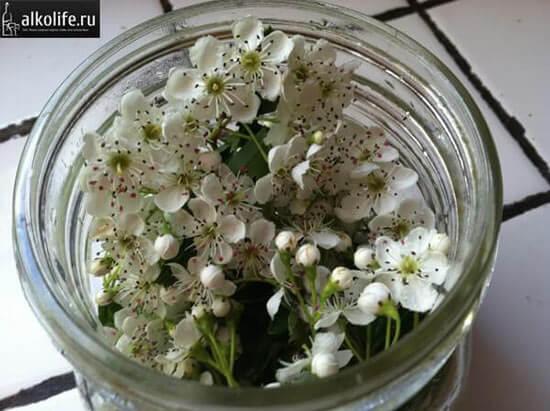 Цветы боярышника для настройки